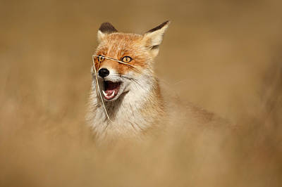 Funny Fox Poster by Roeselien Raimond