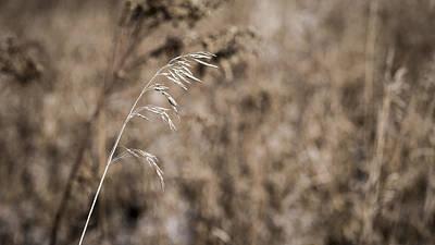 Grass Blade Poster by Steven Ralser
