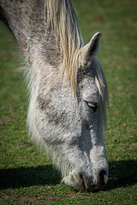 Grazing Horse Poster by Paul Freidlund