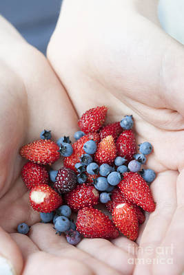 Hands Holding Berries Poster by Elena Elisseeva