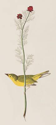 Hooded Warbler Poster by John James Audubon