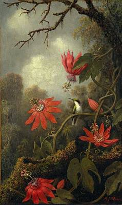 Hummingbird And Passionflowers Poster by Martin Johnson Heade