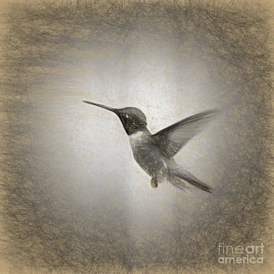 Hummingbird In Charcoal Poster by Janice Rae Pariza