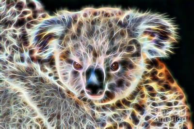 Koala Bear Poster by Marvin Blaine