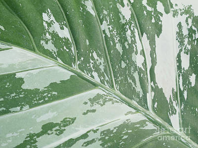 Leafy Abstract Poster by Ann Horn