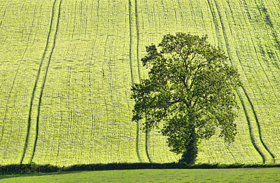Lone Tree Poster by Pete Hemington
