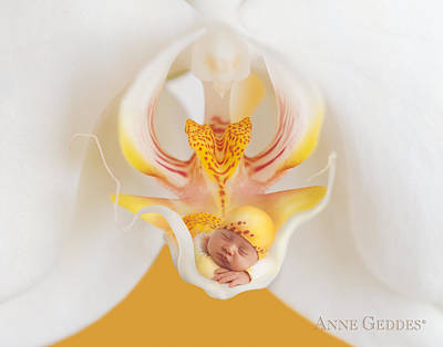 Orchid Poster featuring the photograph Mia In Moth Orchid by Anne Geddes