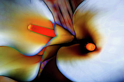 Moody Calla Lilies Poster by Garry Gay