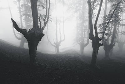 Mysterious Forest In Black And White Poster by Mikel Martinez de Osaba