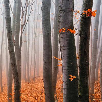 Orange Wood Poster by Evgeni Dinev