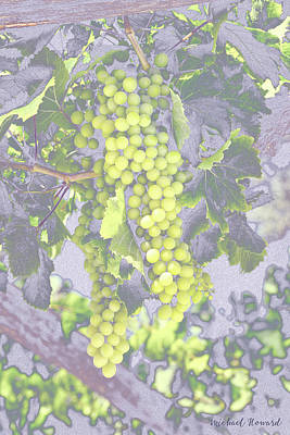 Pastel Grapes  Poster by Mikehoward Photography