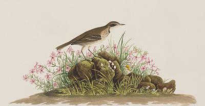 Prairie Titlark Poster by John James Audubon