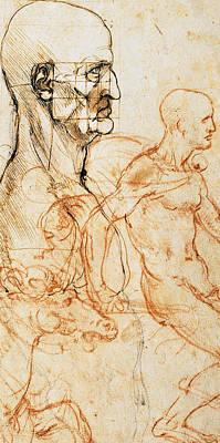 Proportions Of The Face  Poster by Leonardo Da Vinci