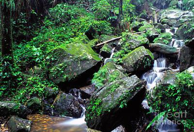 Rainforest Waterfall Poster by Thomas R Fletcher