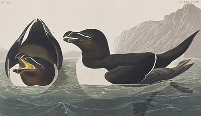Razor Bill Poster by John James Audubon