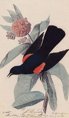 Red Winged Blackbird Poster by John James Audubon