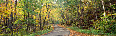 Road Passing Through Autumn Forest Poster by Panoramic Images