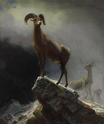 Rocky Mountain Sheep Or Big Horn, Ovis, Montana Poster by Albert Bierstadt