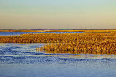 Salt Marsh In Autumn Poster by Michael P Gadomski