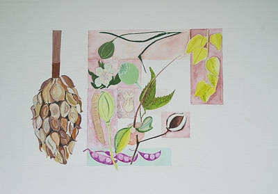 Seed Pods Poster by Diana Davenport