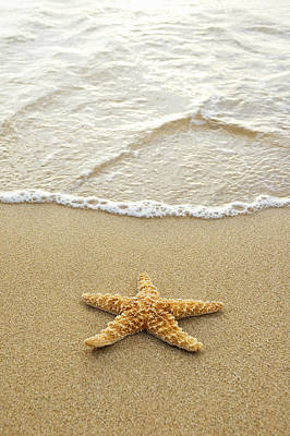 Starfish On Beach Poster by Mary Van de Ven - Printscapes