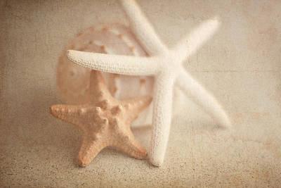 Starfish Still Life Poster by Tom Mc Nemar