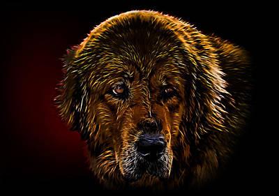 Tibetan Mastiff Poster by Denis Bajan