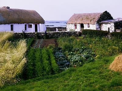 Traditional Cottages, Co Galway, Ireland Poster by The Irish Image Collection