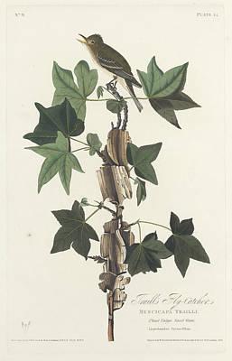 Traill's Flycatcher Poster by John James Audubon