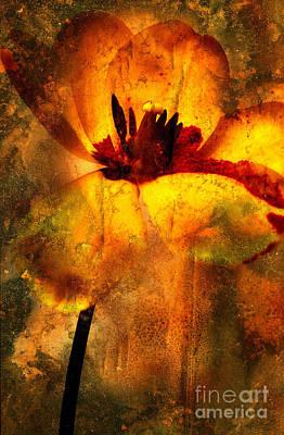 Tulip Poster by Bernard Jaubert
