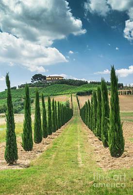 Vineyards And Farm Road In Italy Poster by Deyan Georgiev
