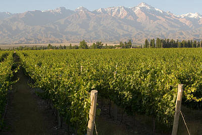 Vineyards In The Mendoza Valley Poster by Michael S. Lewis