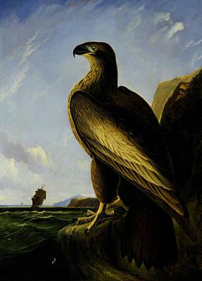 Washington Sea Eagle Poster by John James Audubon