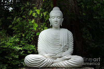 White Buddha Poster by Honey Bee