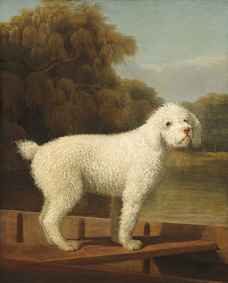 White Poodle In A Punt Poster by Mountain Dreams