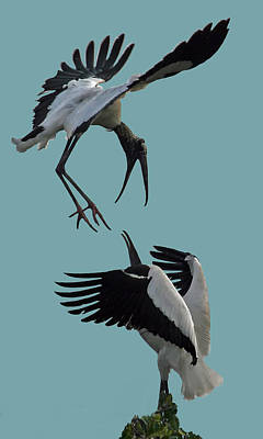 Wood Stork Pair Poster by Larry Linton