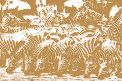 Zebra 3 Poster by Joe Hamilton