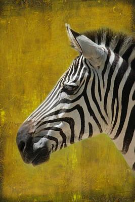 Zebra Poster by Heike Hultsch
