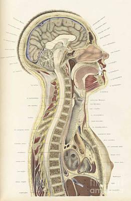 Topographisch-anatomischer, Braune, 1872 Poster by Science Source