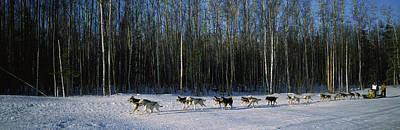 18 Huskies Begin The Long Haul Of 1049 Poster by Panoramic Images