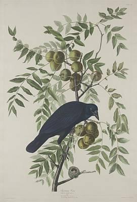 American Crow Poster by John James Audubon