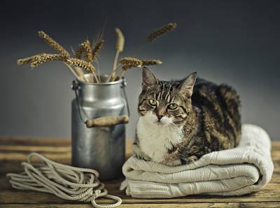 Cat Portrait Poster by Nailia Schwarz