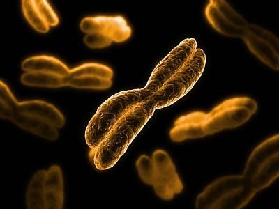 Chromosomes, Artwork Poster by Sciepro