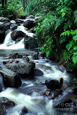 El Yunque Waterfall Poster by Thomas R Fletcher