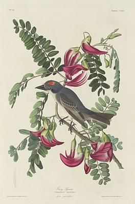 Gray Tyrant Poster by John James Audubon
