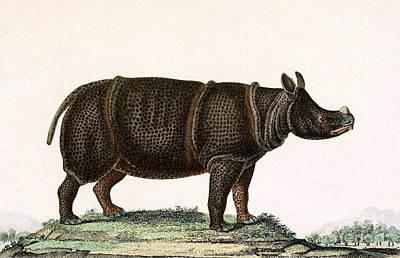 Javan Rhinoceros, Endangered Species Poster by Biodiversity Heritage Library