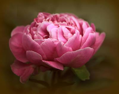 Peony Blossom Poster by Jessica Jenney