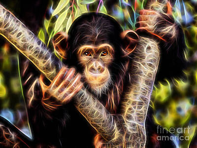 Chimpanzee Collection Poster by Marvin Blaine