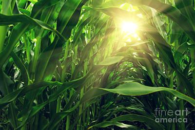 Corn Field Poster by Carlos Caetano