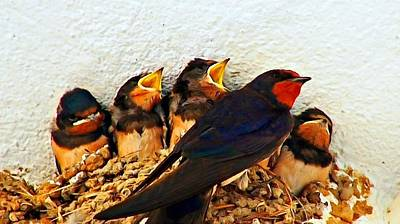 Group Of Young Swallows In The Nest Digitally Painted Poster by Ken Biggs